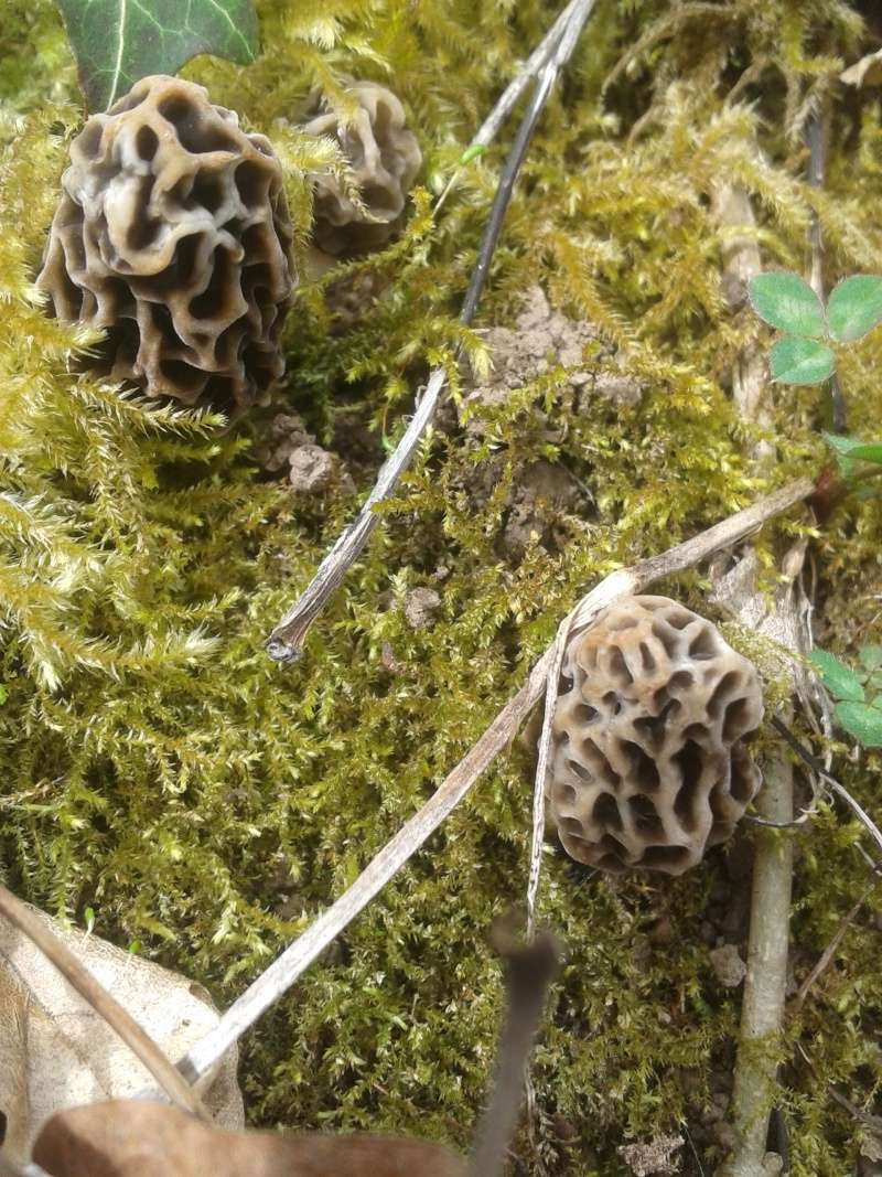 Les champignons , ( girolles , cèpes , morilles ) etc ...  - Page 41 20160349