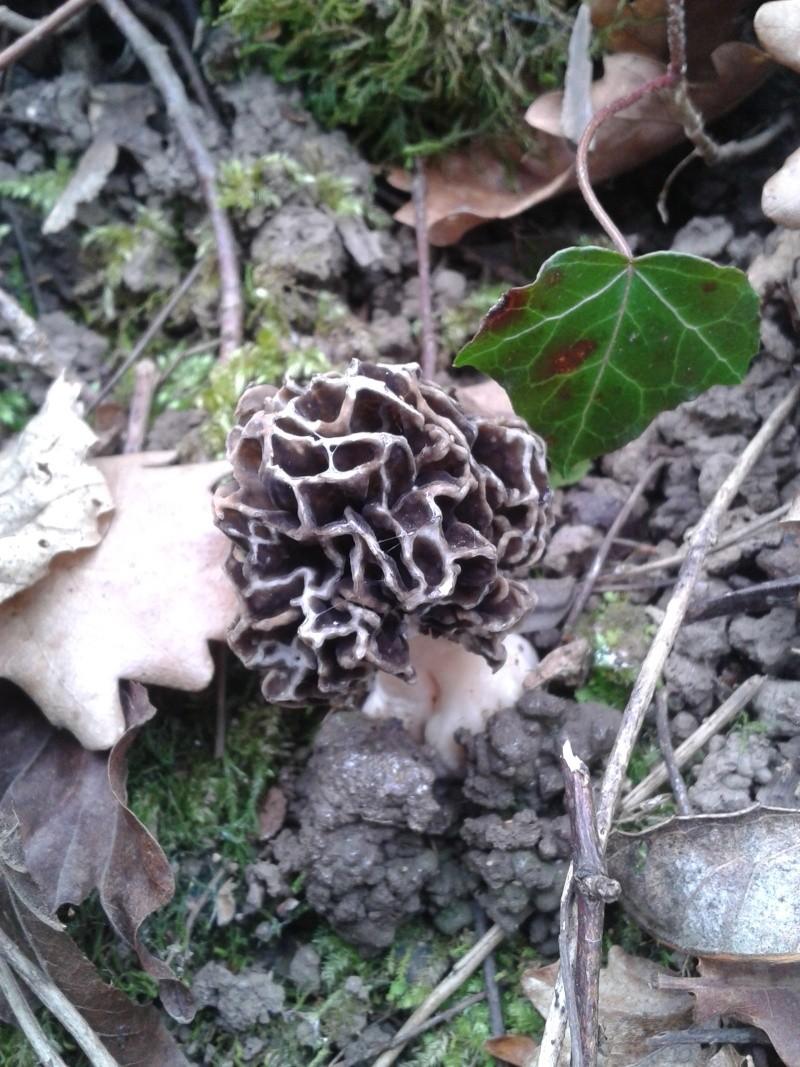 Les champignons , ( girolles , cèpes , morilles ) etc ...  - Page 42 20160423