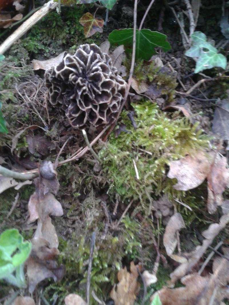 Les champignons , ( girolles , cèpes , morilles ) etc ...  - Page 42 20160446
