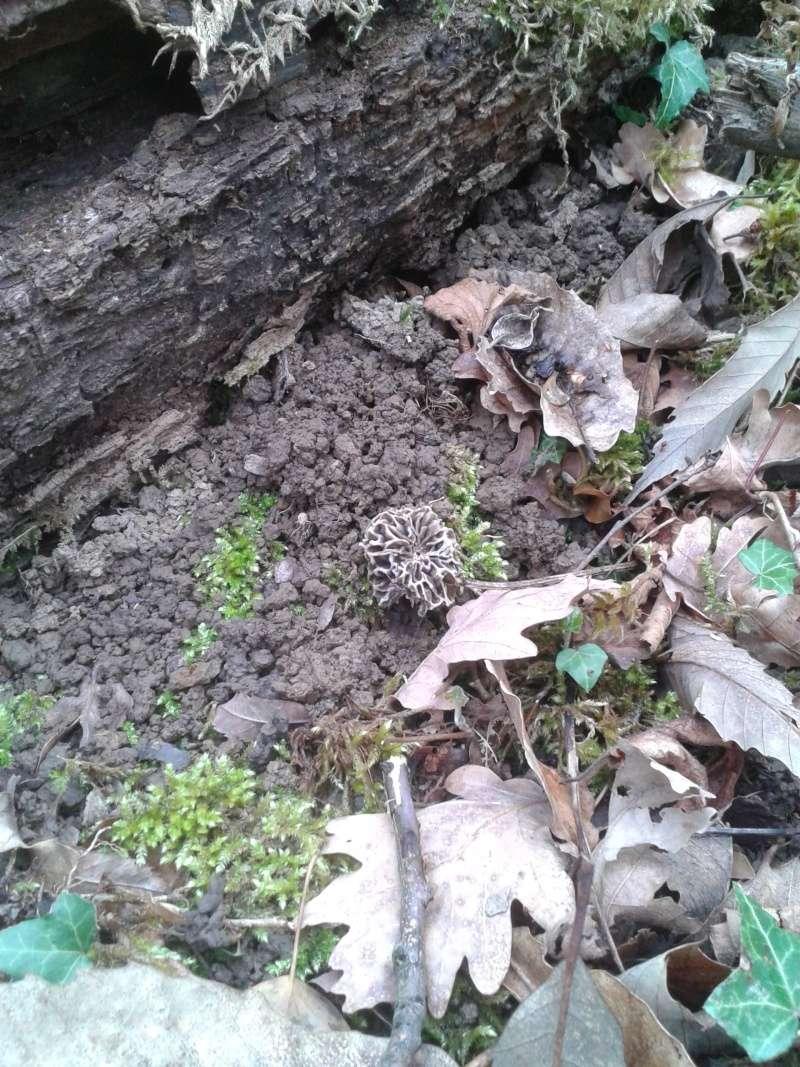 Les champignons , ( girolles , cèpes , morilles ) etc ...  - Page 42 20160449