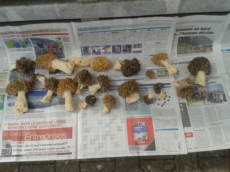 Les champignons , ( girolles , cèpes , morilles ) etc ...  - Page 42 20160462