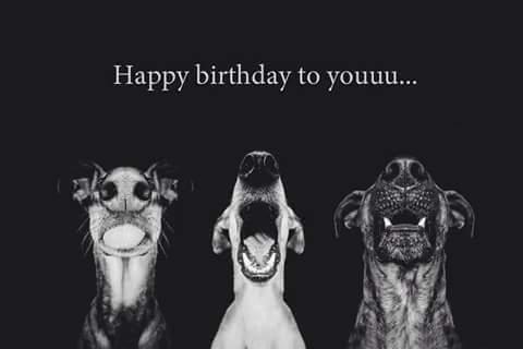 Bon anniversaire Yannotheatre 12718210