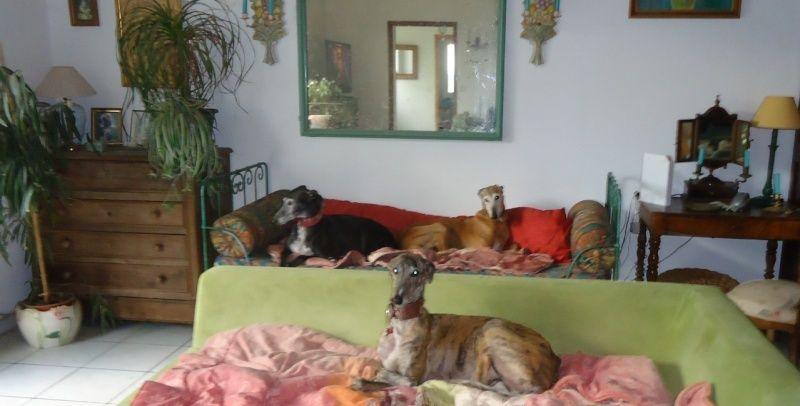 Sevilla tendre et douce galga Scooby France Adoptée - Page 2 Sevill15