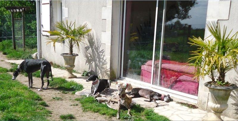 Sevilla tendre et douce galga Scooby France Adoptée - Page 2 Sevill22
