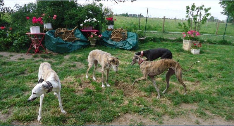 Sevilla tendre et douce galga Scooby France Adoptée - Page 3 Sevill24