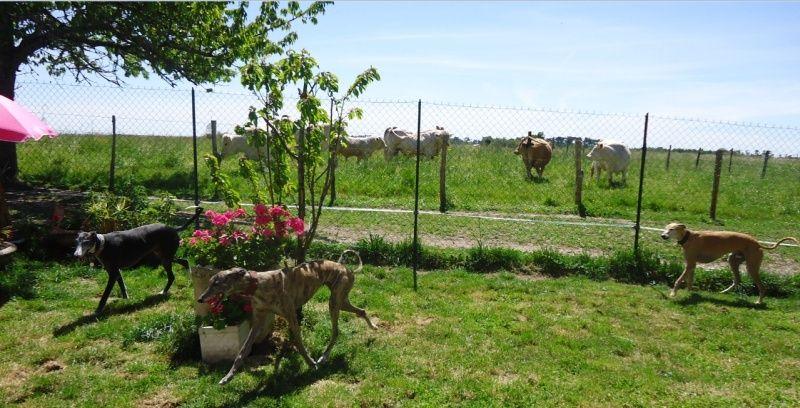 Sevilla tendre et douce galga Scooby France Adoptée - Page 3 Sevill25