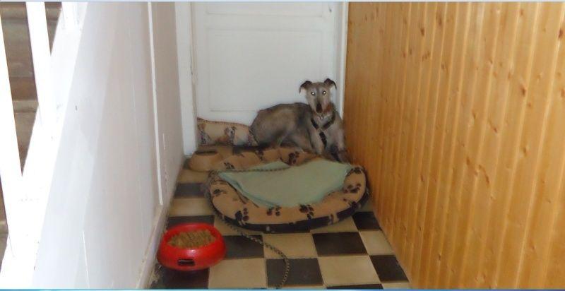 TADEO, barbudo bringé, 3 ans, en accueil chez Laurenciane  Adoptée  - Page 4 Tadeo10
