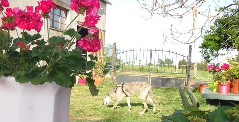 TADEO, barbudo bringé, 3 ans, en accueil chez Laurenciane  Adoptée  - Page 4 Tadeo111
