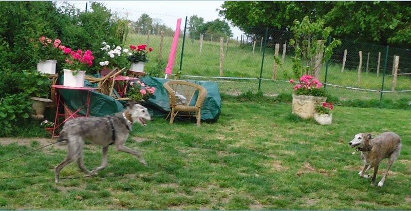 TADEO, barbudo bringé, 3 ans, en accueil chez Laurenciane  Adoptée  - Page 4 Tadeo115