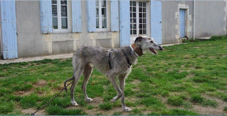 TADEO, barbudo bringé, 3 ans, en accueil chez Laurenciane  Adoptée  - Page 4 Tadeo118