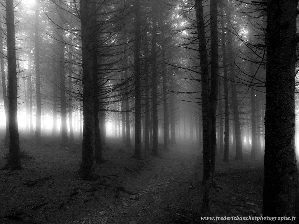 lugubre forêt Lugubr11