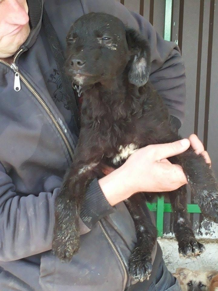 TILK, mâle, taille petite, né environ en  2016 - REMEMBER ME LAND - En FA chez Christiane (Belgique)  13089911