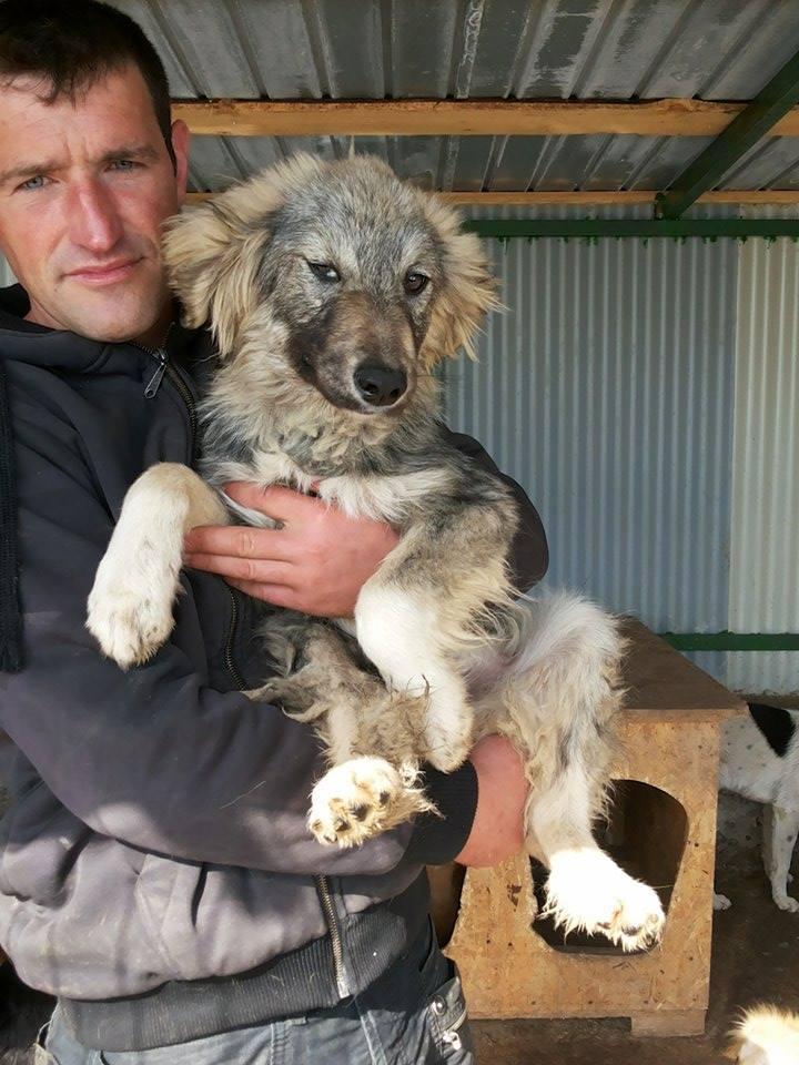 WIFI, mâle, croisé, taille moyenne - REMEMBER ME LAND - Adopté par Elaudie (belgique) 13090511