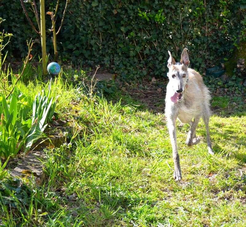 Course poursuite dans le jardin... 12525210