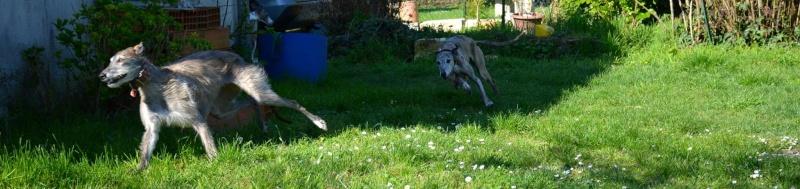 Course poursuite dans le jardin... 12909510