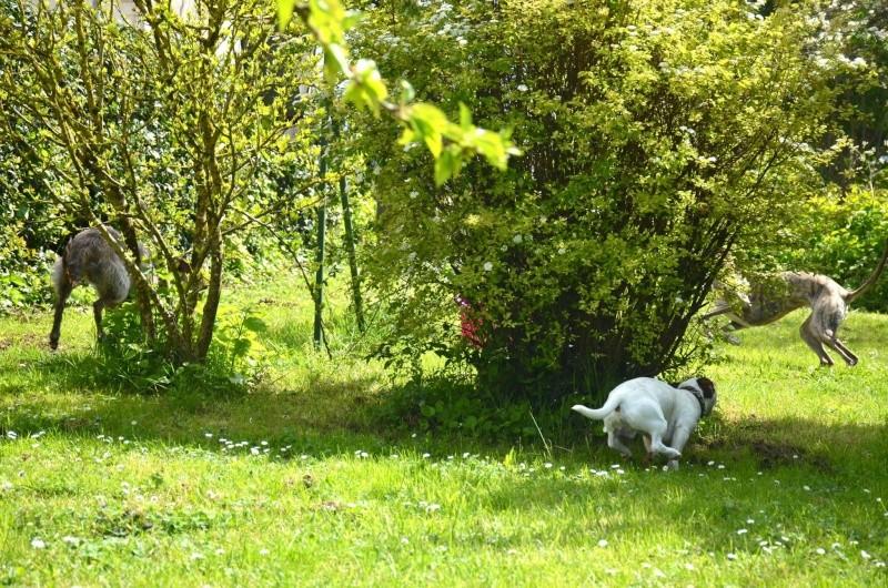 Course poursuite dans le jardin... - Page 2 13041310