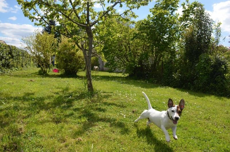 Course poursuite dans le jardin... - Page 2 13041311
