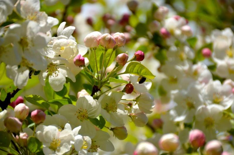 un petit peu de printemps 13048110