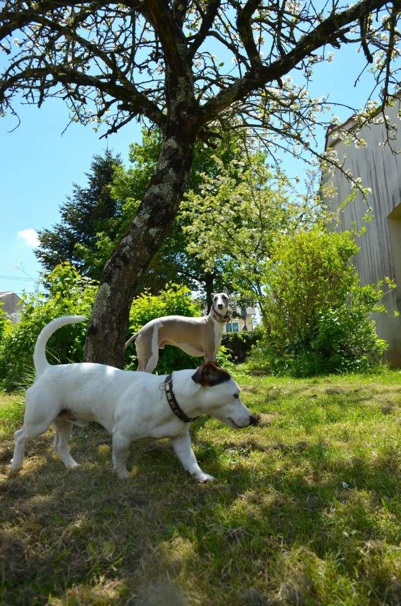 Course poursuite dans le jardin... - Page 2 13116210