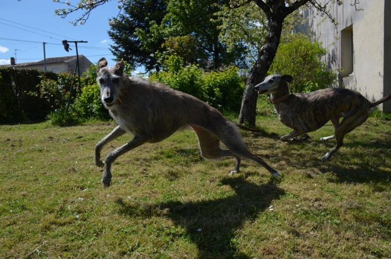 Course poursuite dans le jardin... - Page 2 13130810