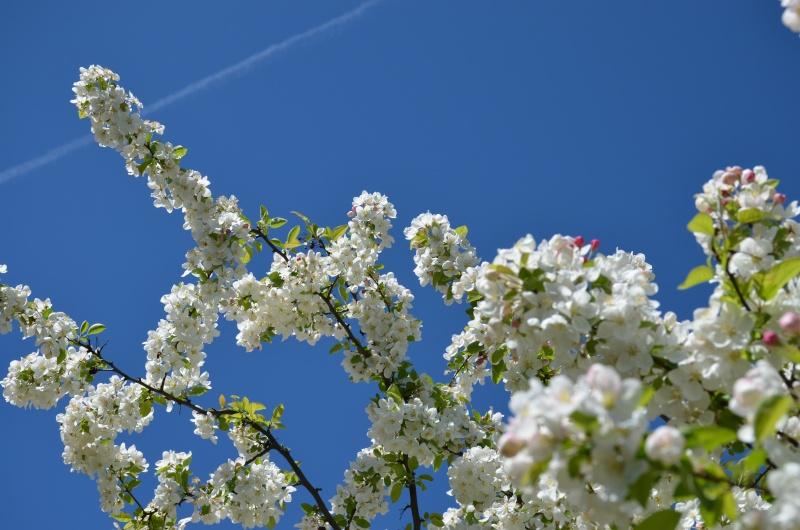 un petit peu de printemps Dsc_0811