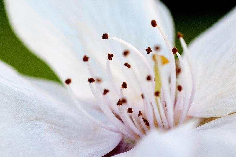 Blog giapponese : Sakura de Prog! Dsc_4912