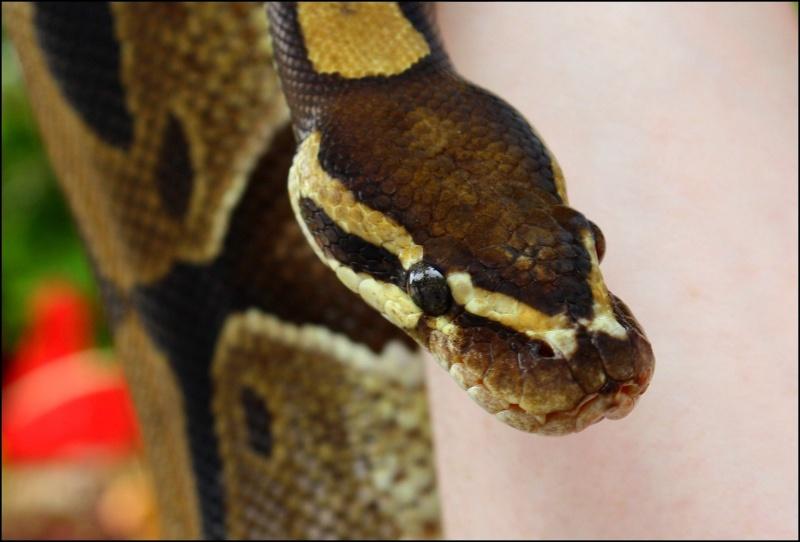 [Fil ouvert à tous] Reptiles, serpents, tortues, amphibiens, ... - Page 4 816_po10