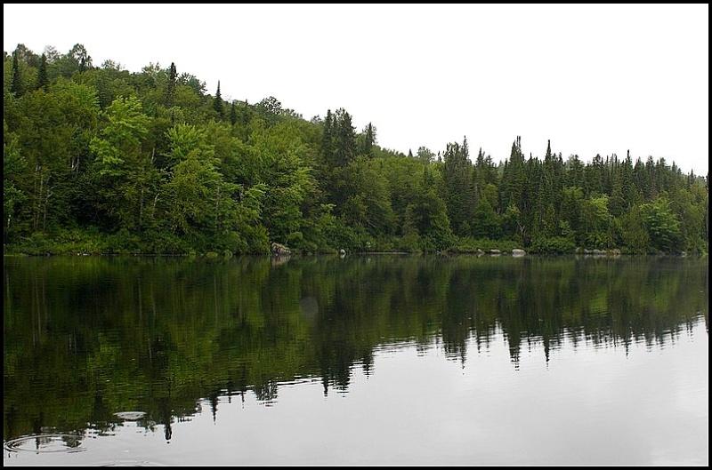 [fil ouvert] la forêt dans tous ses états A11