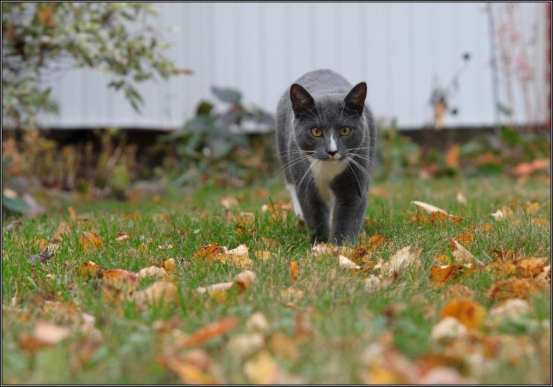 [fil ouvert] Les chats  Automn10