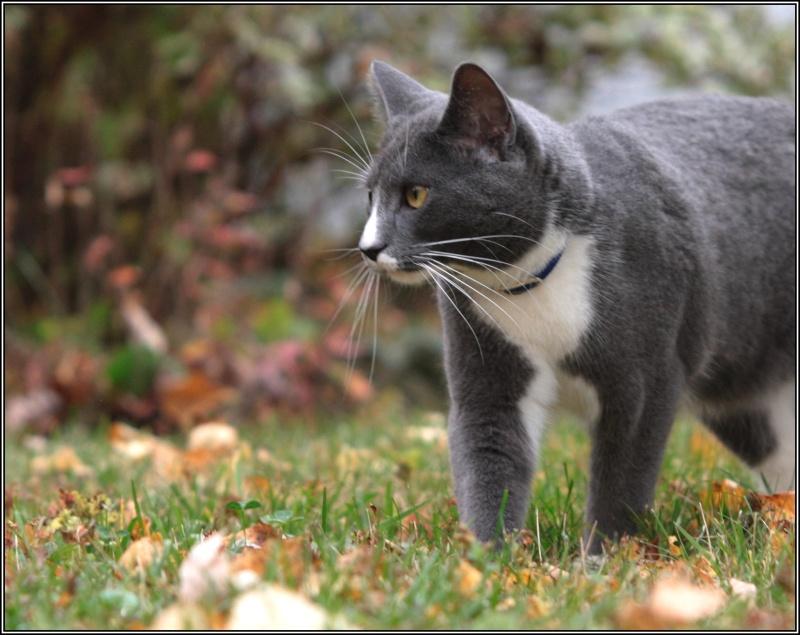 [fil ouvert] Les chats  Automn11