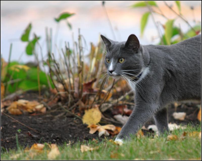 [fil ouvert] Les chats  Automn12