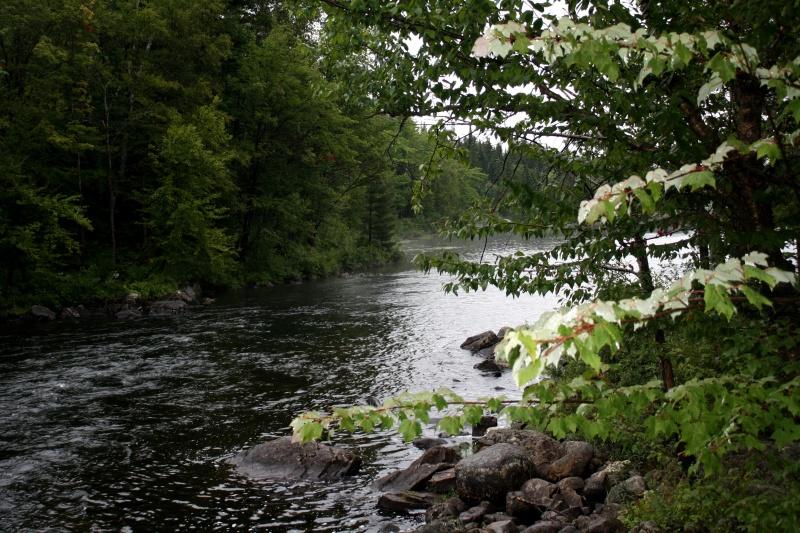 [fil ouvert] la forêt dans tous ses états C10