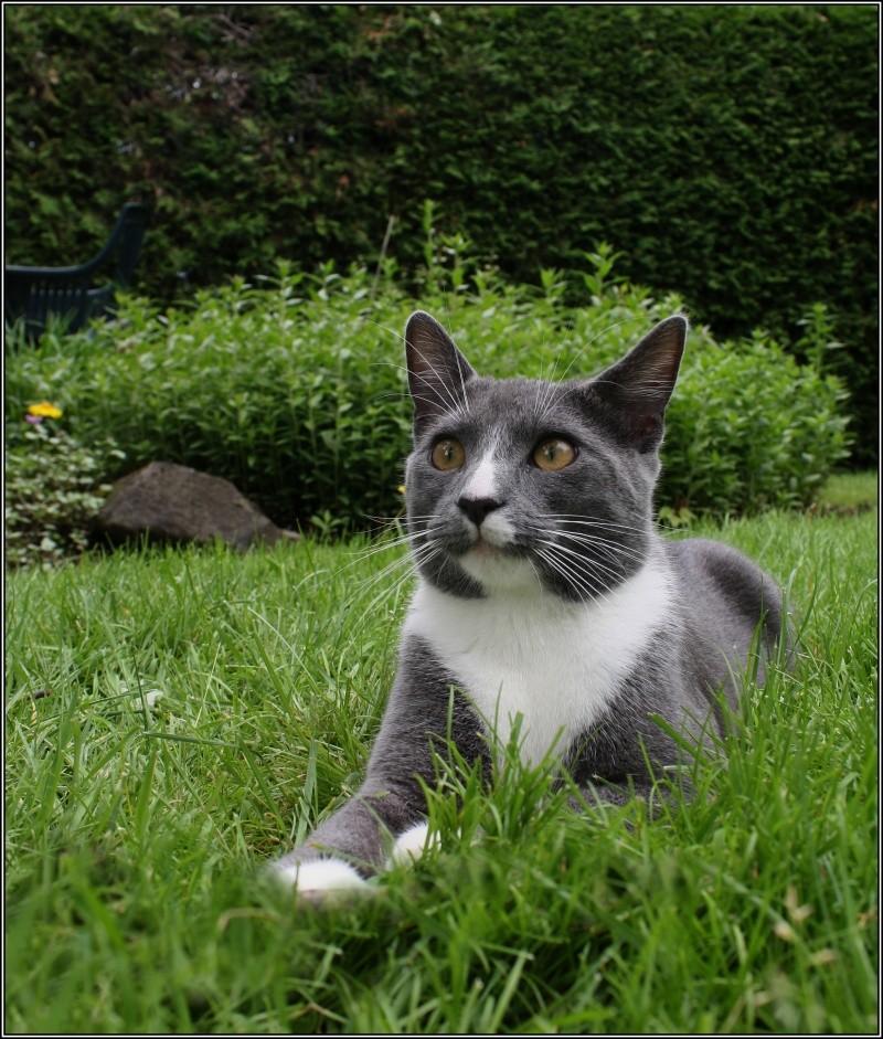 [fil ouvert] Les chats  Dehors10