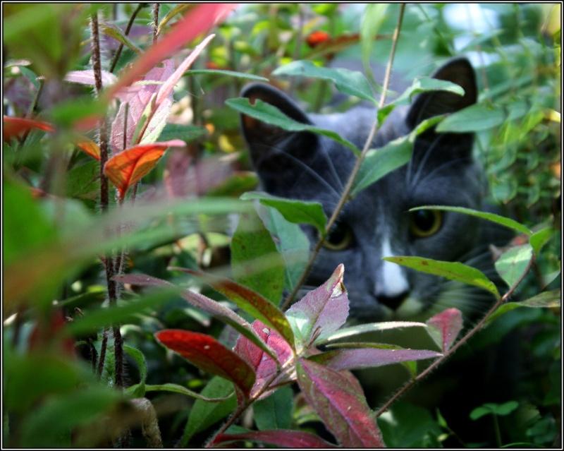 [fil ouvert] Les chats  Escarg10
