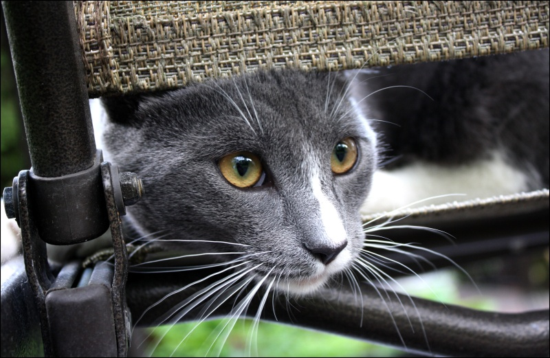 [fil ouvert] Les chats  Mia_1_11