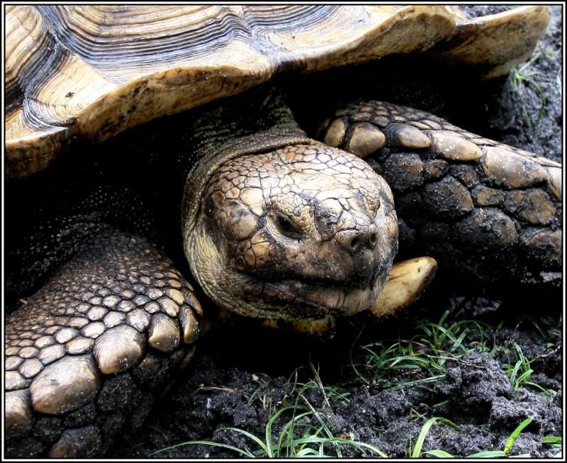 [Fil ouvert à tous] Reptiles, serpents, tortues, amphibiens, ... - Page 2 Xvacan10
