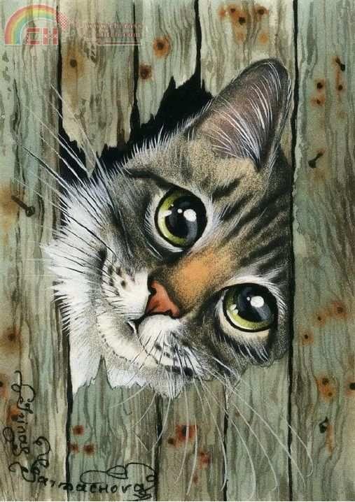 Les chats - Page 38 02fcc510