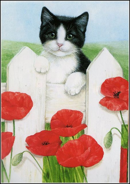 Les chats - Page 39 2d9bf110