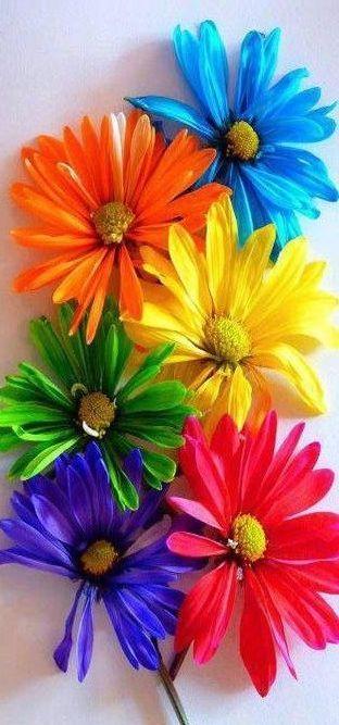 tout est multicolore 41452310