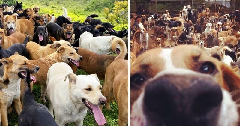 Le paradis des chiens errants Ileaux10