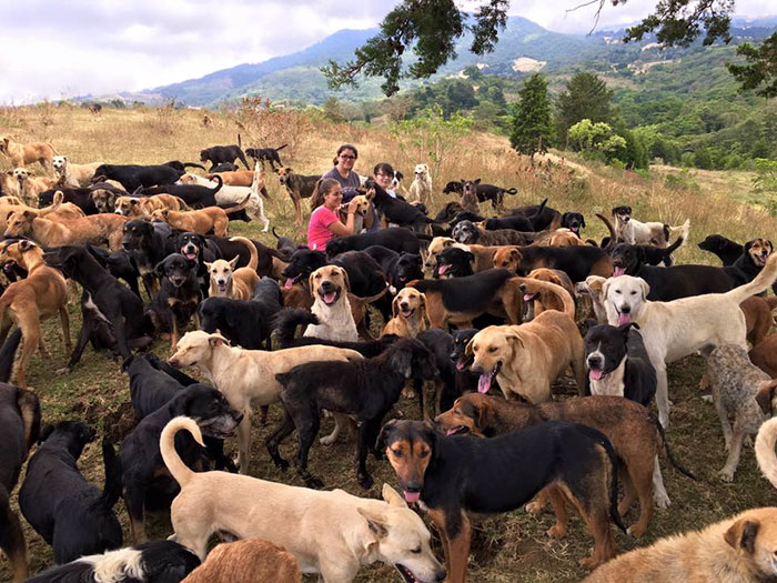 Le paradis des chiens errants Land-o10