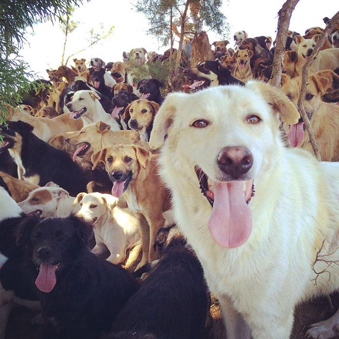 Le paradis des chiens errants Land-o11