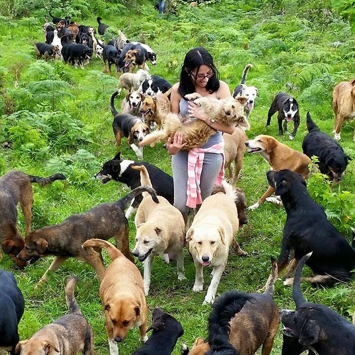 Le paradis des chiens errants Land-o12