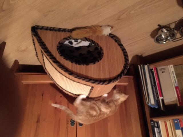 T@B pour les chats Image29