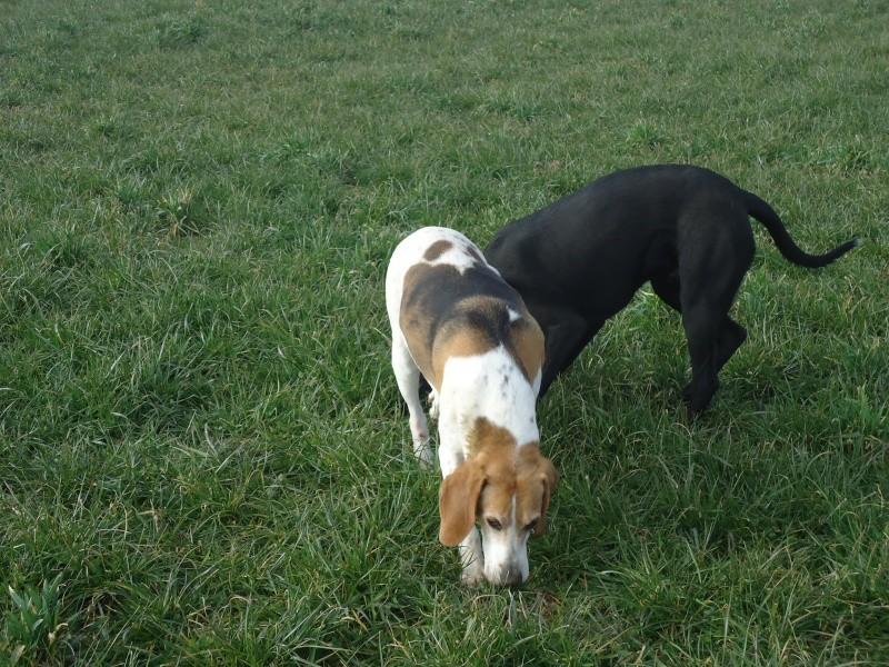 Foxy et Délice Dsc01512