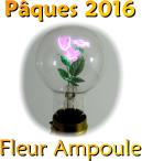 Avis Survivor  Fleur_18