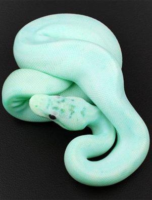 Mais quel est donc ce serpent ?  13254010