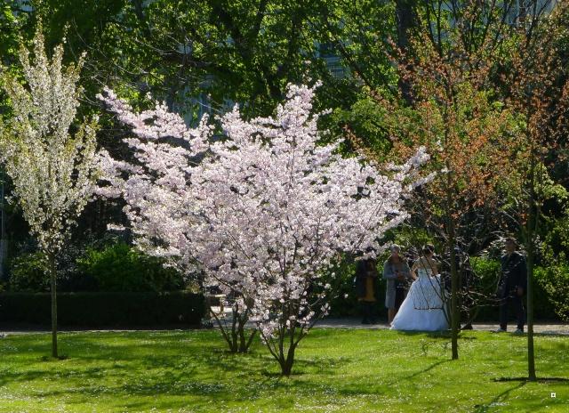 Choses vues dans le jardin du Luxembourg, à Paris - Page 4 Luxavr10