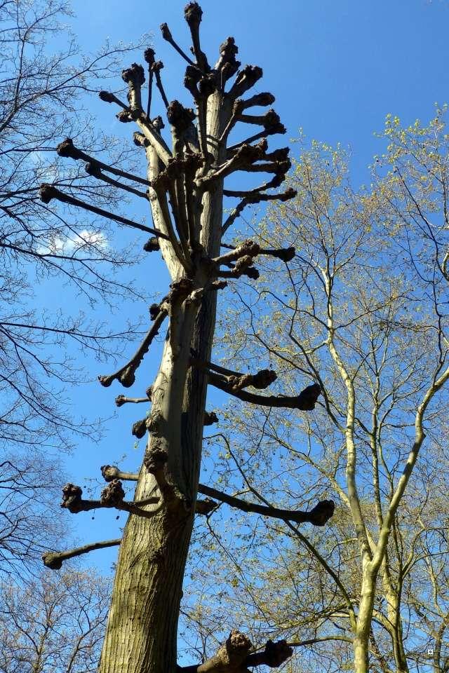 Choses vues dans le jardin du Luxembourg, à Paris - Page 4 Luxavr13