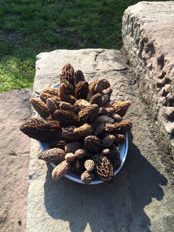 Les champignons , ( girolles , cèpes , morilles ) etc ...  - Page 42 12957211
